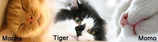 threecats4.jpg