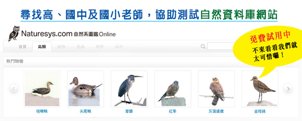 ebirds.jpg