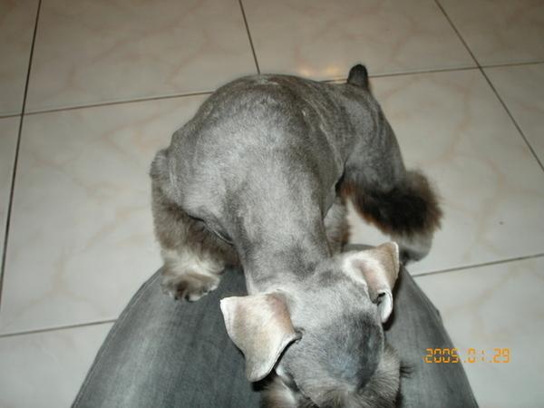 第一次剪毛,好害羞