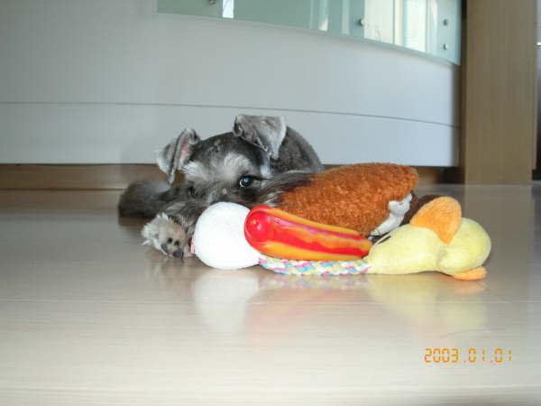這是我的玩具..不要想偷!