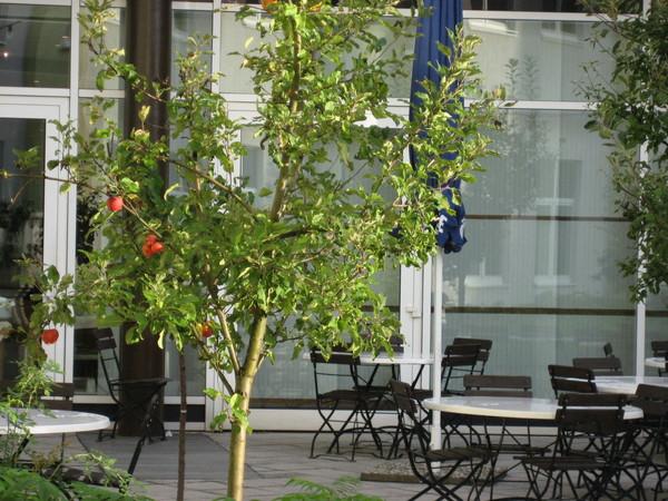 飯店房間外的蘋果樹