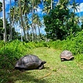 11 Seychelles Fregate5.jpg