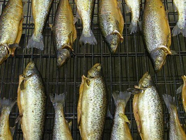 41 south salmon ginseng farm15