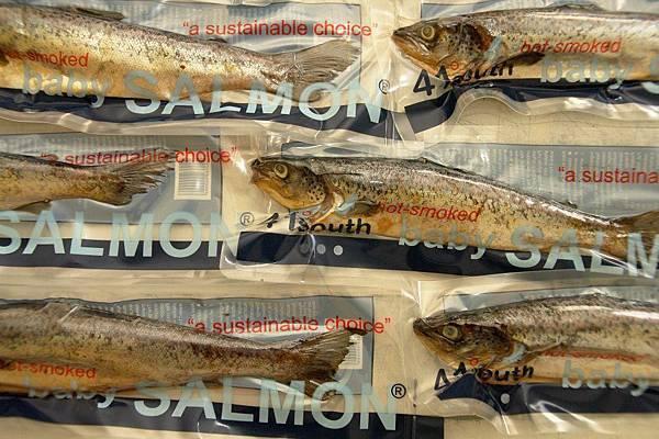 41 south salmon(deloranie tas