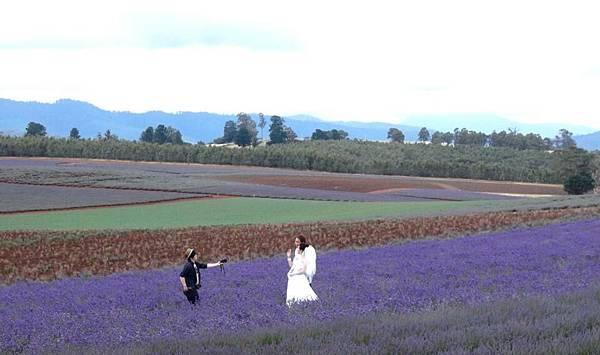 Bridestowe Lavender(tas11