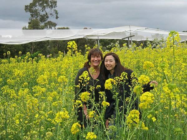 Sorell fruit farm(flower