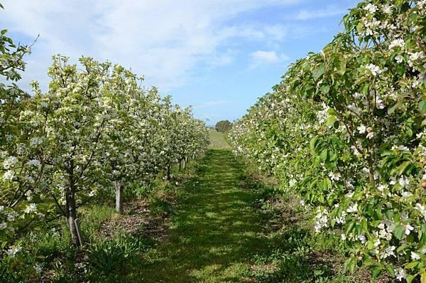 Sorell fruit farm(cherry trees