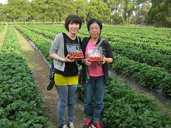 Sorell fruit farm(strawberries