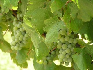 Sutton Forest Estate Wines1