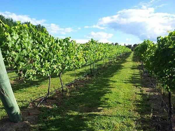 Sutton Forest Estate Wines2