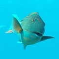 Niyama Resort(Maldive)20.jpg
