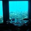 Niyama Resort(Maldive)1.jpg