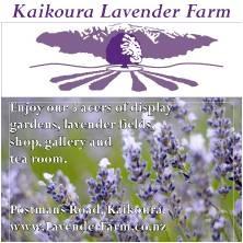 KAIKOURA(LAVENDER FARM2.jpg