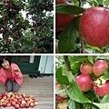 Riwaka River Cottage (apple.jpg