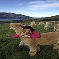 Shamarra Alpacas Farm(Akaroa1.jpg