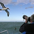 Albatross(KAIKOURA (1).jpg