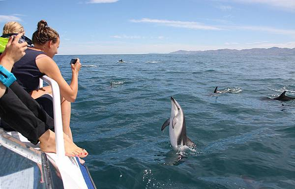 DOLPHIN ENCOUNTER(KAIKOURA (5).jpg