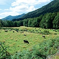 Murchison(farm.jpg