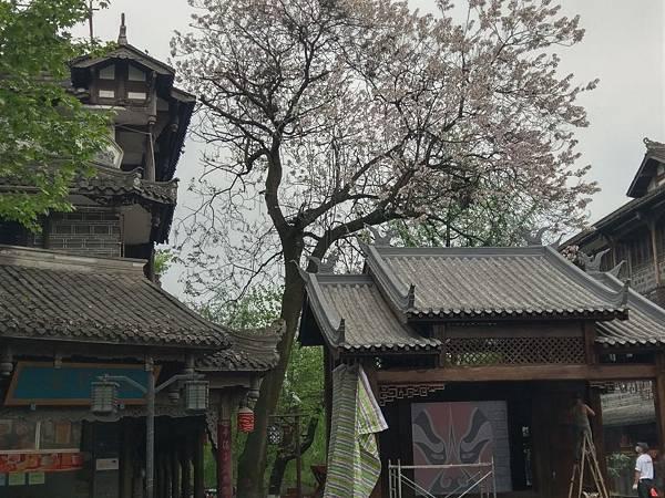 都江堰 (113).jpg