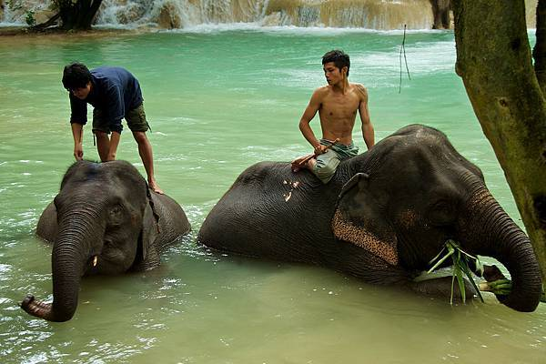 Tad Sae Falls(elephant shower.jpg