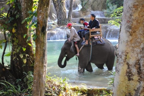 Tad Sae Falls(elephant ride.jpg