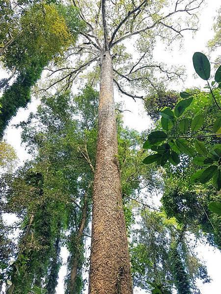 Lao Green (LPQ ;green jungle23.jpg