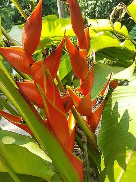 Lao Green (LPQ ;green jungle20.jpg