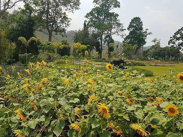 Lao Green (LPQ ;green jungle21.jpg