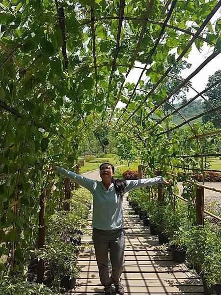 Lao Green (LPQ ;green jungle18.jpg
