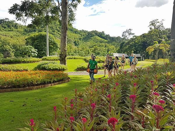 Lao Green (LPQ ;green jungle15.jpg