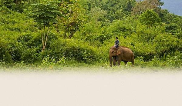 Elephant Sanctury Village(LpQ;2