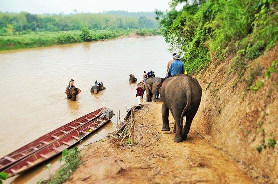 Elephant Sanctury Village(LpQ;4