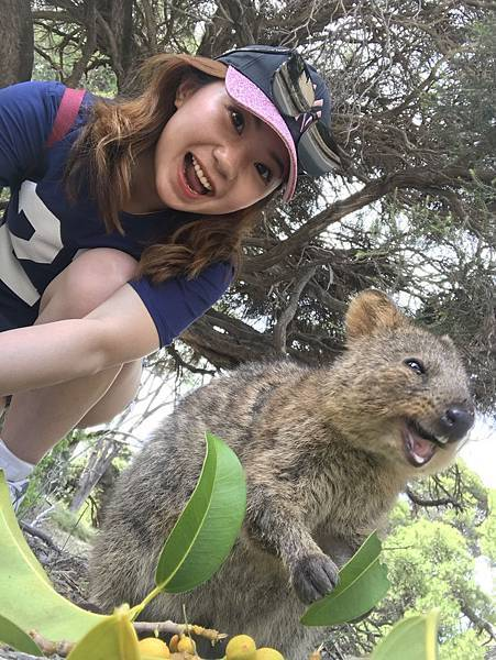 SMILE QUOKKA(HIGH.jpg