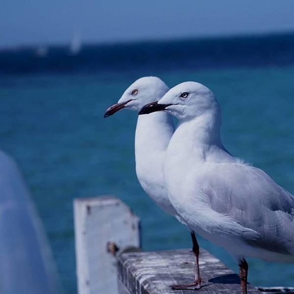 WA(BIRD (3).jpg