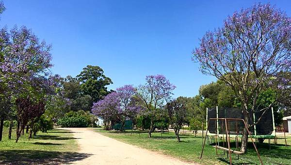 Kellers B&B(Swan valley;Jacaranda