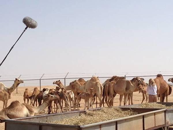 Majilis Dubai Mall(Camel milk3.jpg