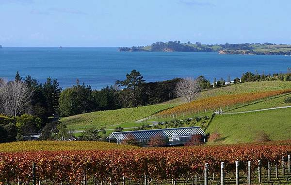 Matakana Tours(AKL;WINERY.jpg