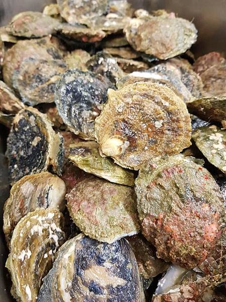 Ortega Fish Shack & Bar(WLG;BLUFF OYSTER.jpg