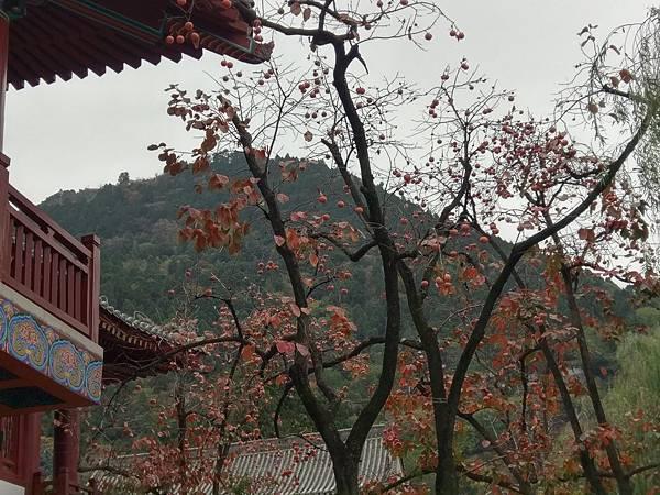 華清池 (16).jpg