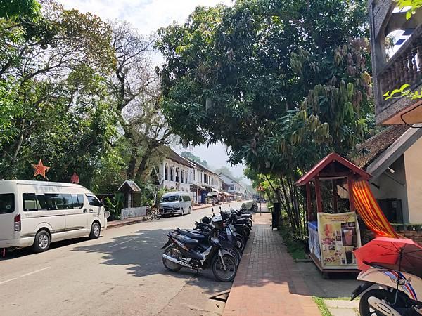 Bamboo Tree(LPQ) (9)