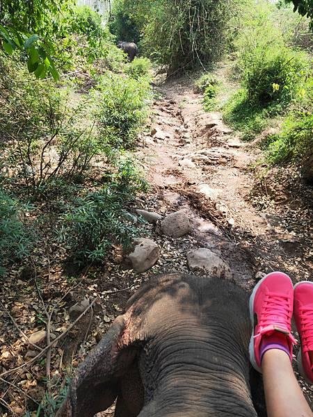 Manifa Elephant camp (5)