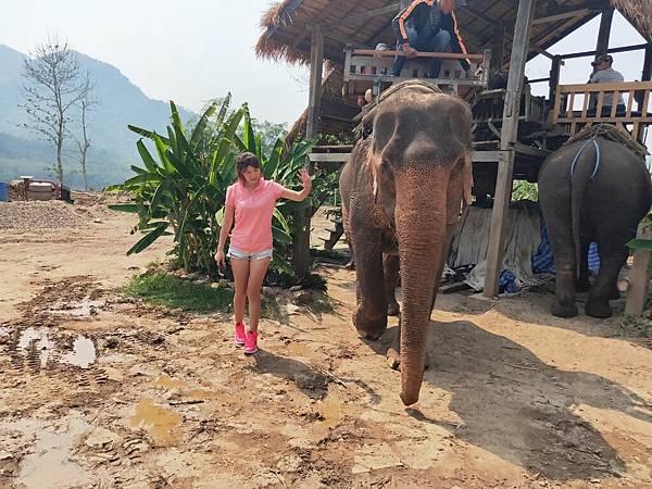 大象營區 (6)