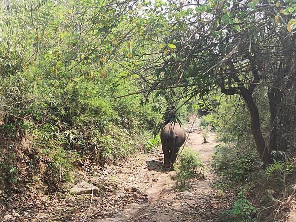 Manifa Elephant camp (2)