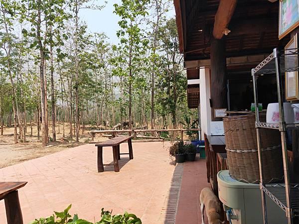 Manifa elephant camp (7)