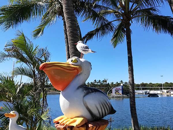 大嘴鳥與海鷗.jpg