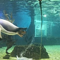 Sea life aquarium (4).jpg