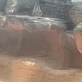 Wildlife Sydney Zoo (8).jpg