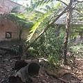 Wildlife Sydney Zoo (9).jpg