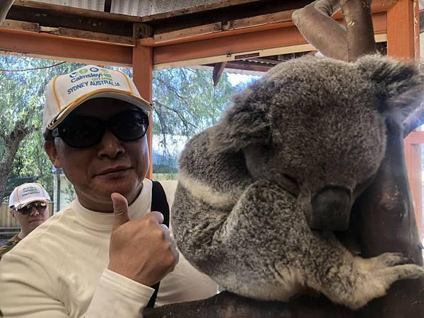 City Farm(koala.jpg