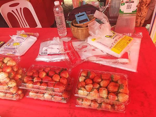 草莓(藍廟 (3).jpg